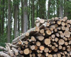 AMTEGA habilitará en 2020 a nova plataforma Xesbío para a xestión dixital da biomasa